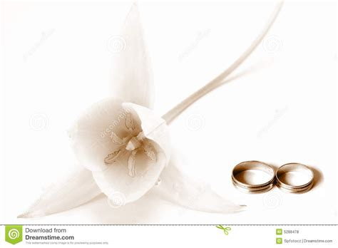 Wedding Concept Images by Wedding Concept Royalty Free Stock Photos Image 5288478