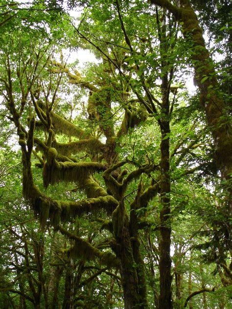 gambar pohon alam gurun cabang menanam daun bunga