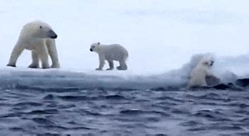 40 of the most adorable animal gifs you ll see