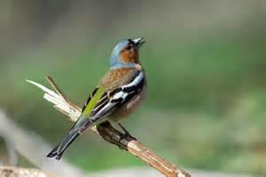 vogel garten v 246 gel im garten beobachten gartentechnik de