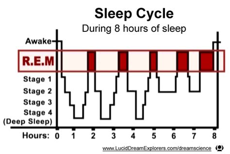 Ultradian Rhythm Psychology Essay by Sleep Cycle And The Circadian And Ultradian Rhythm