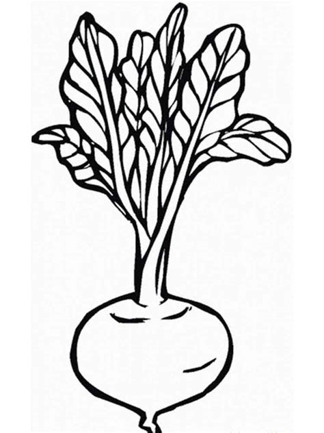 turnip coloring pages download and print turnip coloring