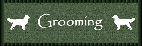 how often should i brush my golden retriever meadow golden retrievers in central florida quot grooming quot