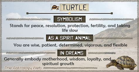 turtle meaning  symbolism  astrology web turtle