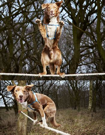 Tali Untuk Peliharaan Anjing Tali Anjing anjing ini pegang rekor dunia paling cepat lari di atas tali kabar berita artikel