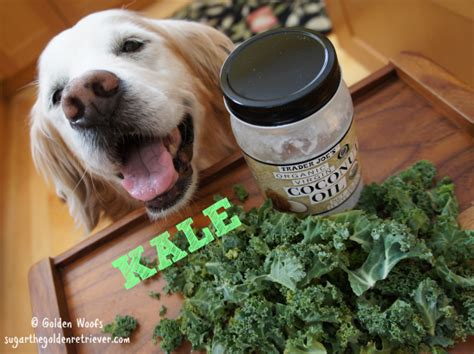 can dogs drink coconut water green kale pops golden woofs