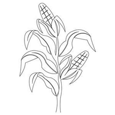 Corn Stalk Template by 25 Best Ideas About Corn Stalks On A Maze In
