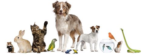 Pets At Home Small Dogs Walking Pet Sitting Boarding Services Pet And