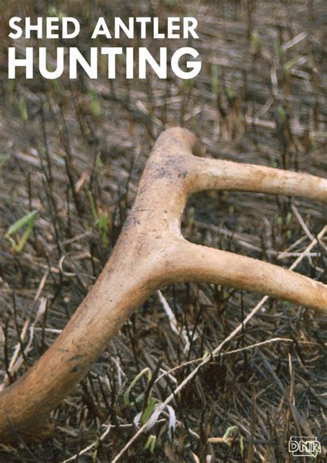 how to a to hunt shed antlers how to find antler sheds 10 reasons why you aren t finding more shed antlers deer