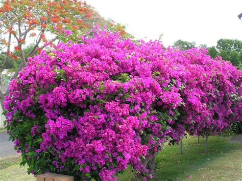 Supérieur Jardin Aromatique D Interieur #8: Le-haie-fleurie-toute-l-année-arbisseaux-rose-fleurie.jpg