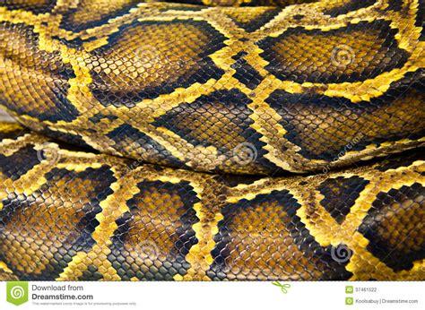 design pattern in python pattern skin of snake stock photo image of python