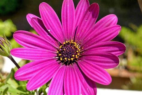 fiori mondo pescara inaugurata la 41 mostra fiore