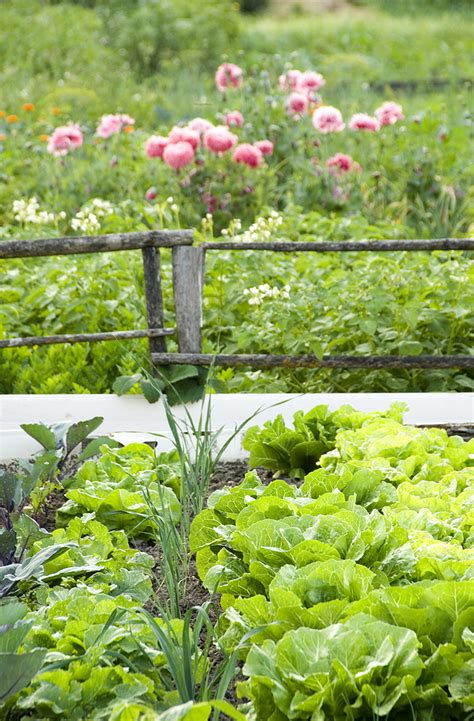 vegetable root depth interplanting vegetables root depth plant height
