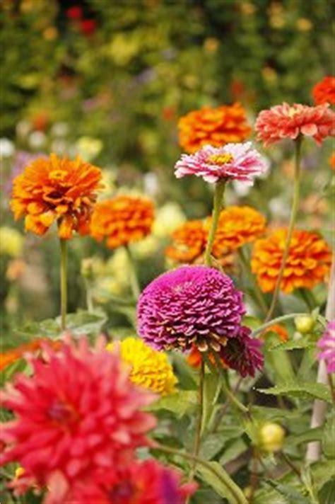 foto fiori coloratissimi prato con tanti fiori coloratissimi fotoamore it