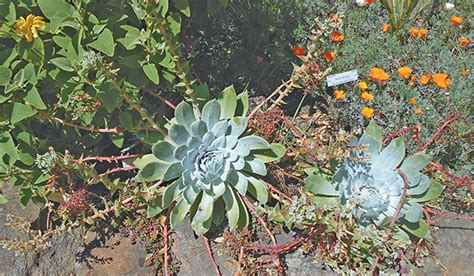 oakland botanical garden oakland botanical garden lakeside palmetum botanical
