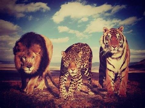 imagenes tumblr com leopardo tumblr