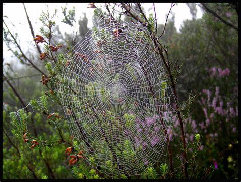imagenes extranas naturaleza telara 241 a fotos de naturaleza