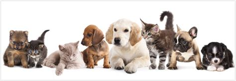 adopt a pet rancho mirage