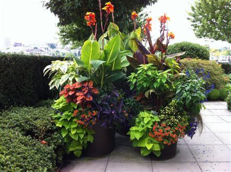 subtropical garden design ideas sub tropical garden design ideas modern patio outdoor