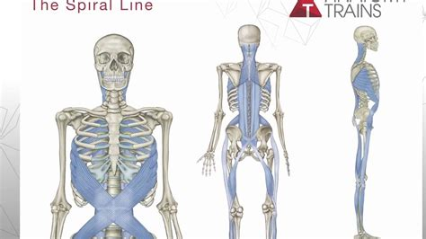 tom myers introduces anatomy trains 3rd edition youtube - Cadenas Musculares Thomas Myers Pdf