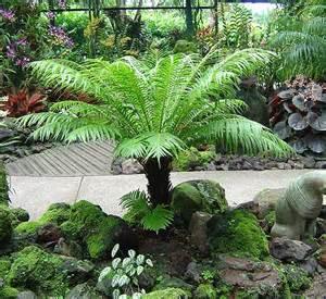 Low Light Tropical Plants - plants amp flowers 187 dwarf tree fern