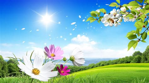 wallpaper flower scenery scenery backgrounds image wallpaper cave