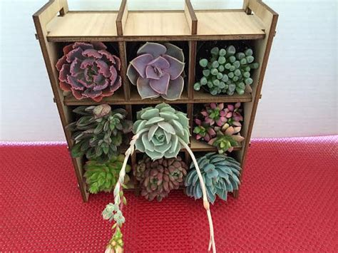 Shadow Box Planter by Succulent Plant Shadow Box Nine Succulent Planter Complete From Succulentoasis On Etsy Studio