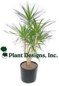 1000 ideas about indoor palms on pinterest tropical house plants green plants and plants indoor