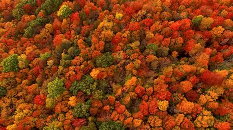 fall autumn why does fall foliage turn so red and fiery it depends