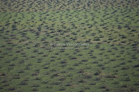 codigo banco 0061 foto a 233 rea vista a 233 rea de vegeta 231 227 o no mato grosso