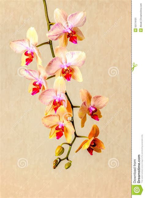 composition with beautiful blooming orchid with water spa composition with beautiful orchid stock image