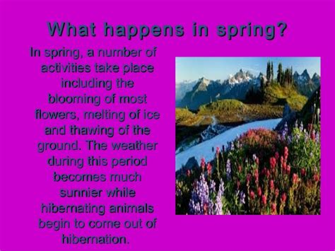 what is spring spring