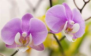 Ideas For Decorating A Small Sitting Room - tips on growing phalaenopsis orchids