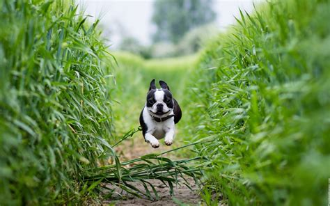 running puppy puppy running jump images new hd wallpapers