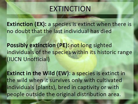 definition of extinction eniscuola