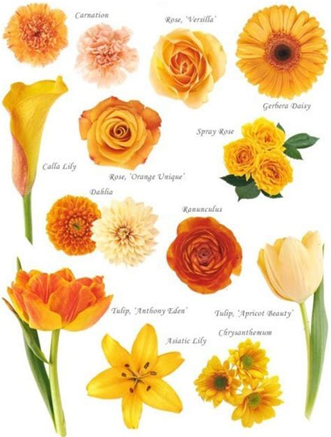 i do it yourself flowers by colour