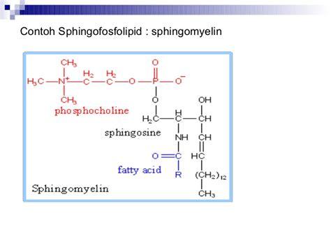 Contoh Biokimia | materi biokimia lipid