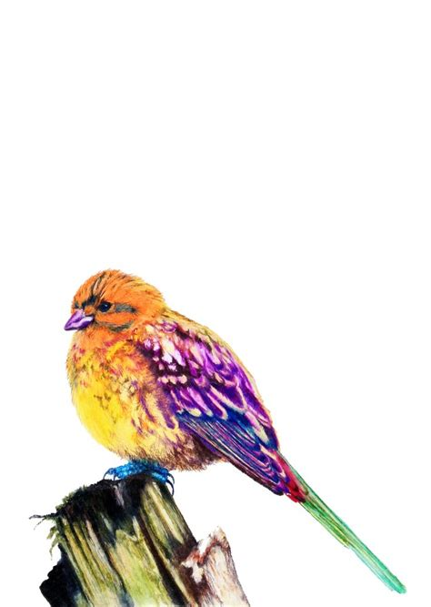 alabama state bird yellowhammer 10 quot x 12 quot color pencils