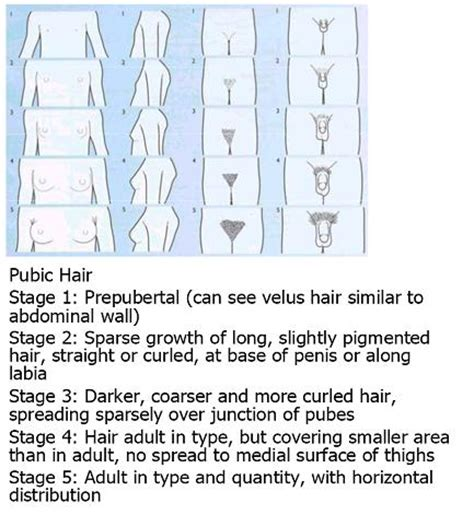 the stages of puberty in pictures medacad wiki approach to delayed puberty