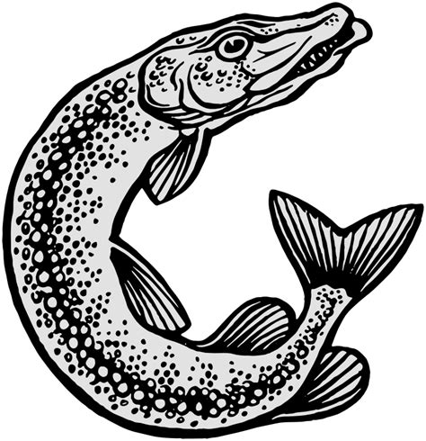 pike drawing animals aquatic fish p pickerel pike pike