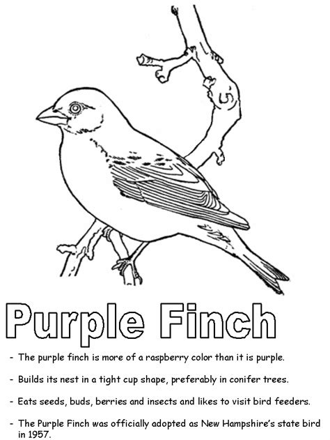 zebra finch coloring page finch coloring download finch coloring