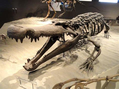 World's top 6 biggest prehistoric crocodiles ever lived ... Giant Alligator Dinosaur
