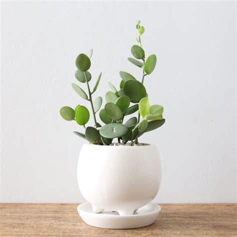 coole zimmerpflanzen 誰でも育てられるオシャレな観葉植物 サボテン 多肉植物と雑貨の通販 販売 ayanas アヤナス