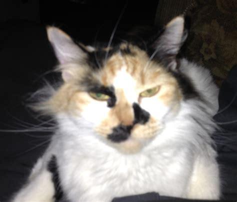 Angry Cat Meme Generator - meme creator angry cat meme generator at memecreator org