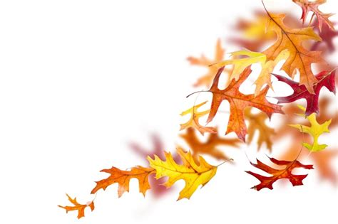 5 Fun Diy Crafts For Fall Recyclenation Fall Leaves On White Background
