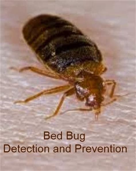bed bugs detection bed bug detection and prevention eeeewwww hotels and used