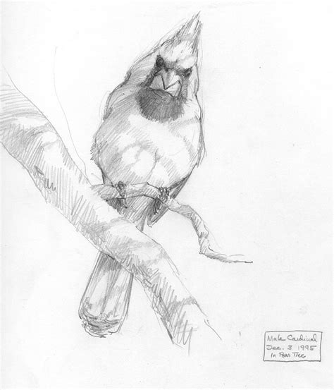 Sketches Drawings by American Bird Sketches Drawing The Motmot