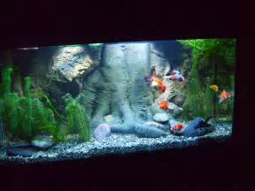 Goldfish Tank Ideas . Goldfish are cold water fish that can live 10 to