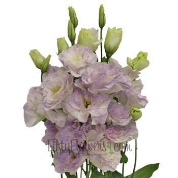 new at fiftyflowers fresh lavender 25 best ideas about lisianthus flowers on