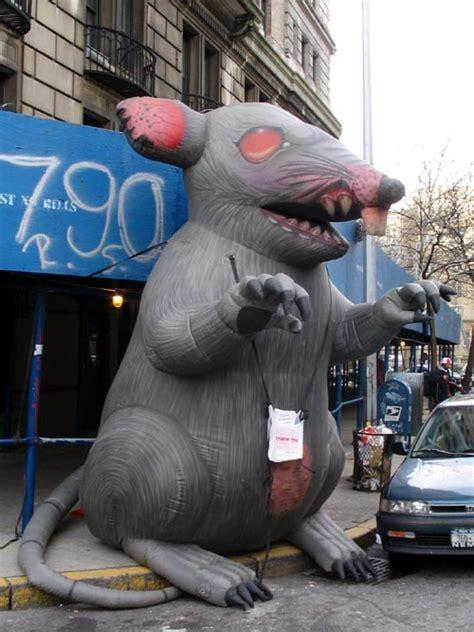 york city union rat
